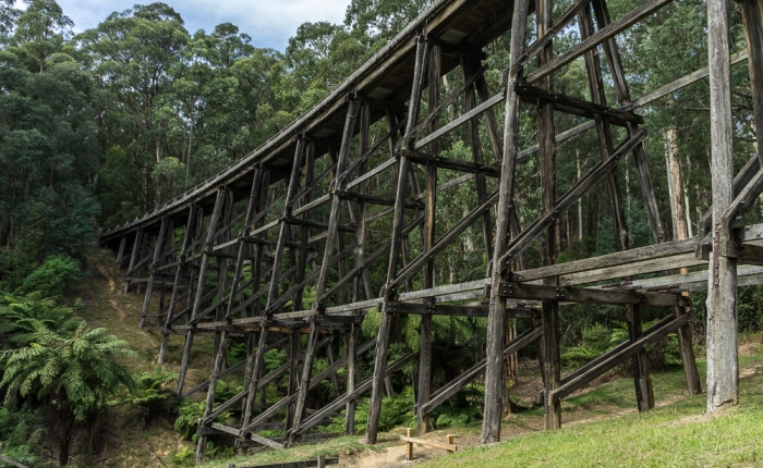 Autumn Outings – Noojee Trestle Bridge